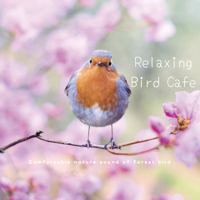 ハイレゾアルバム/ゆったりのんびりバードカフェ | Relaxing Bird Cafe 〜 Comfortable nature sound of forest bird/VAGALLY VAKANS