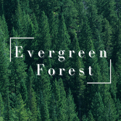 アルバム/Evergreen Forest/Relaxing BGM Project