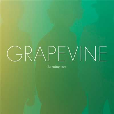 アルバム/Burning tree/GRAPEVINE