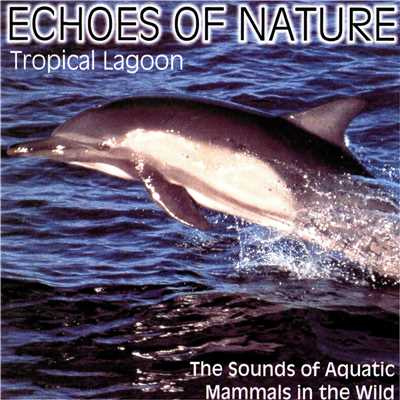 アルバム/Echoes of Nature/Echoes of Nature - Tropic Lagoon