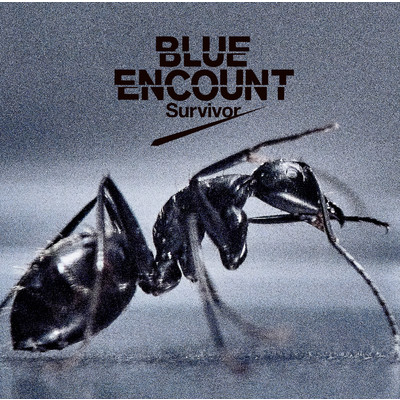 アルバム/Survivor/BLUE ENCOUNT